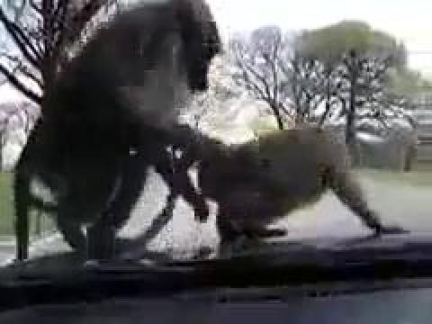 Видео, в котором снят на камеру секс с обезьянами
